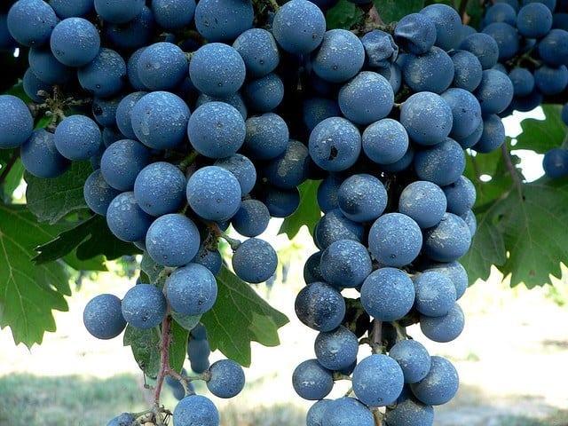 uvas en la cosmética