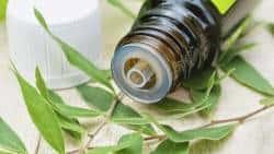 Aceite Árbol de Té, conoce todos sus beneficios