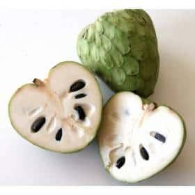 La Chirimoya fruta medicinal